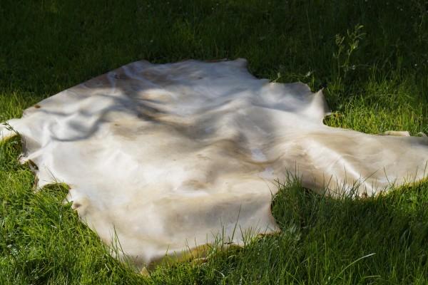 peau de cerf pour tambour chamanique